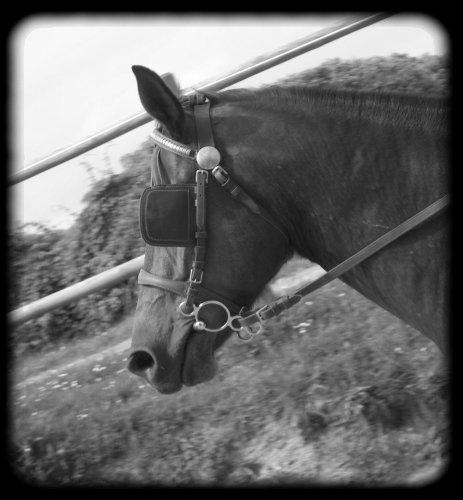 ouzo-mon-cheval