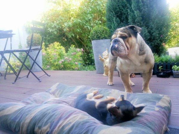 Une vrai vie de chien...