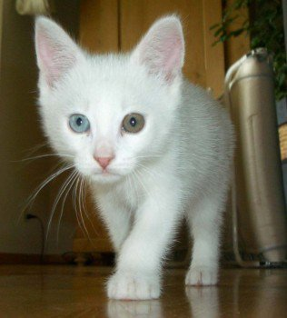 Ma chatte blanche et ses chatons: