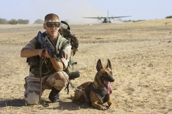 Ma passion: L'armée, les chiens tous ça ensemble c'est maitre chien le plus beau métier a mes yeux