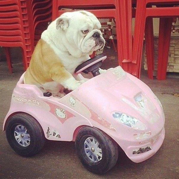 Pumba est en colère car il est en retard pour le studio et doit surveiller son Billou chéri!!