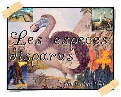 ♥QUELQUES ESPECES DISPARUES♥