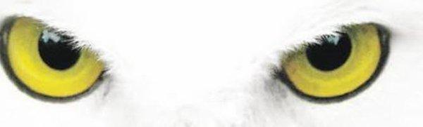 Misericordia - Jack Wolf
