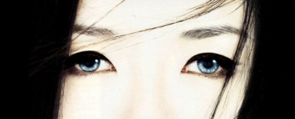 Geisha - Arthur Golden - Adaptation
