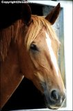 Photo de xxx-cheval-xxx