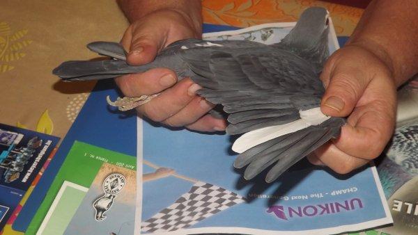 femelle noir plume blanche gb 06n21715
