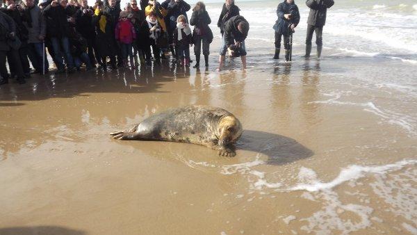 20 février 2012 - Relâcher de phoques a Sangatte