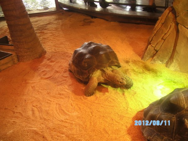de magnifique tortue