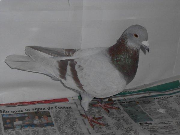 Menier  n° 039424 / 2011