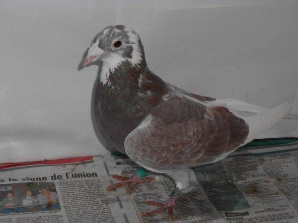Roux macot  n°  19528 / 2010