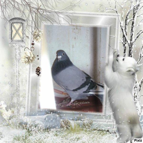 bleu plumes  blanche : t36419/10 GB