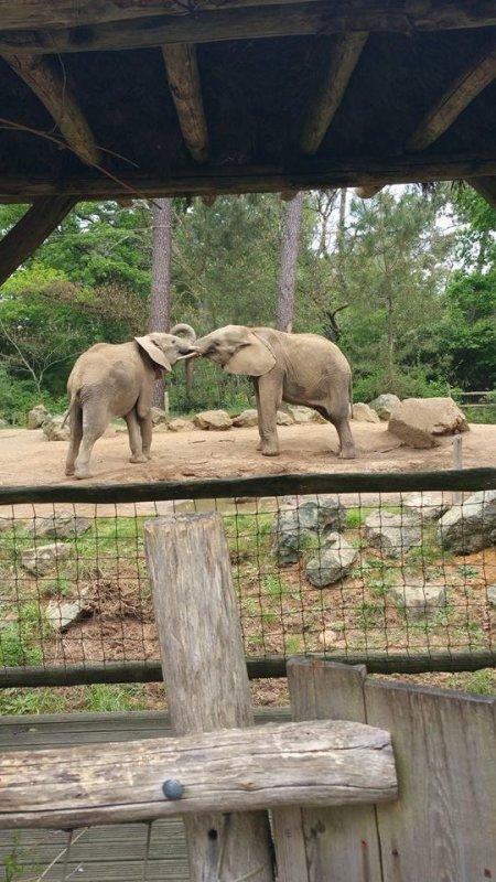 enclos des éléphants