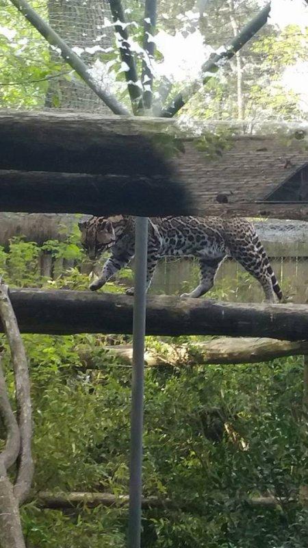 jolie léopard