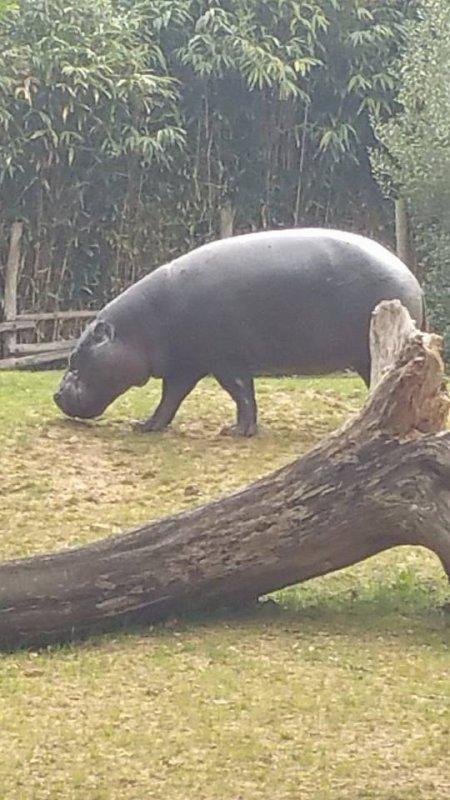 notre amie l'hippopotamame