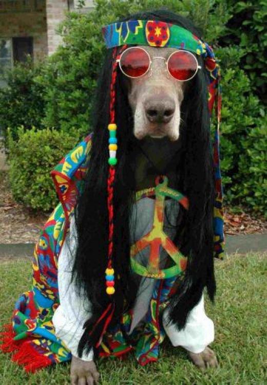 le chien de mes rêves ....