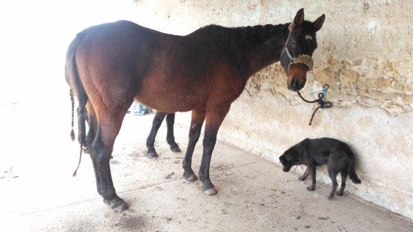 8-13 février : nouveau cheval!