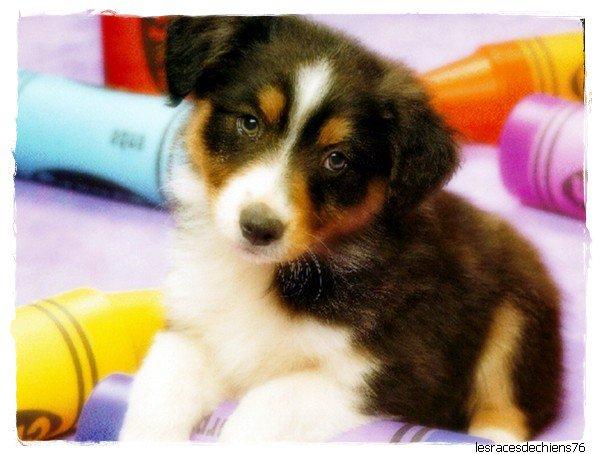 Votre blog pour tout savoir sur les chiens
