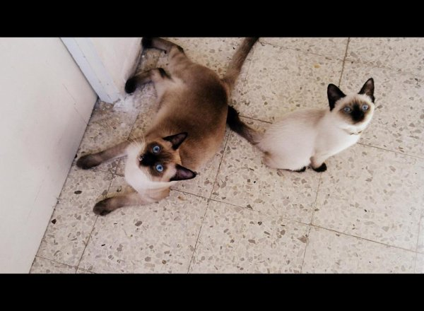 mes deux chats ^^ a croqué