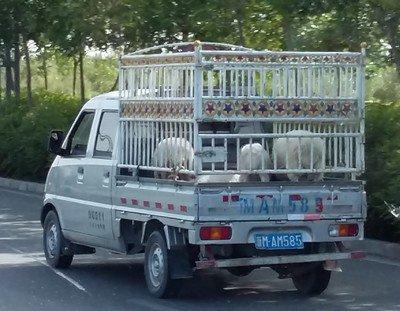 Taklimakan Rally : 5. Sur la route de Ruoqiang