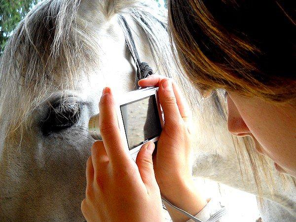 L'Art Equestre en Photographie