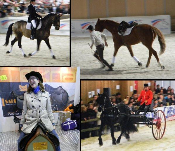 Salon du cheval Le 12 / 12 / 2010
