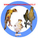 Pictures of ilcanarinoarricciato