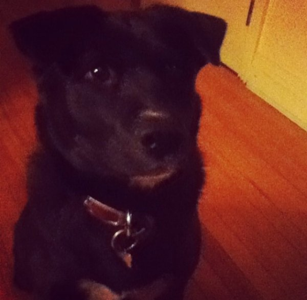 Mon chien ❤