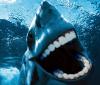ça fait moins peur un requin avec des dents humaines xDD !!