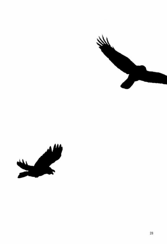 Crows Zero BorderLerss  CHAPITRE 2