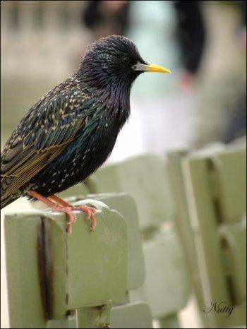 Oiseau du Jardin du Luxembourg
