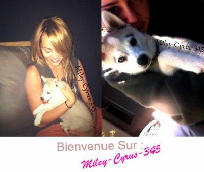 Miley-Cyrus-345