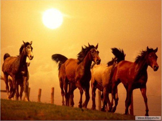 Le cheval l'histoire de tout une vie !