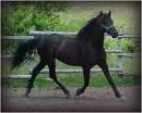 Photo de xx-Horse-Love13-xx