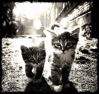 chatons^^