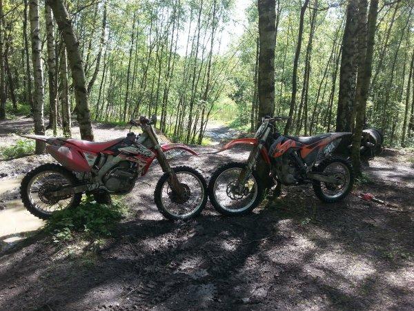 petite journée dans les bois (y)