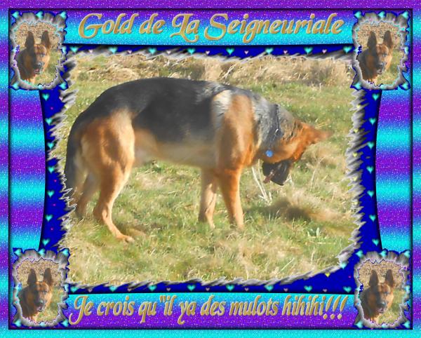 GOLD NEWS ET PHOTOS DE BALLADE