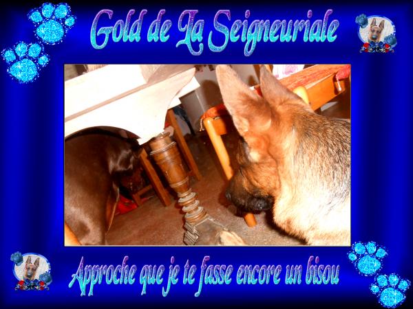 GOLD PHOTOS AVEC GAUTA LUNDI 24.02.2014 ET RECIT DE NOTRE ROUTE DE RETOUR JEUDI 27.02.2014