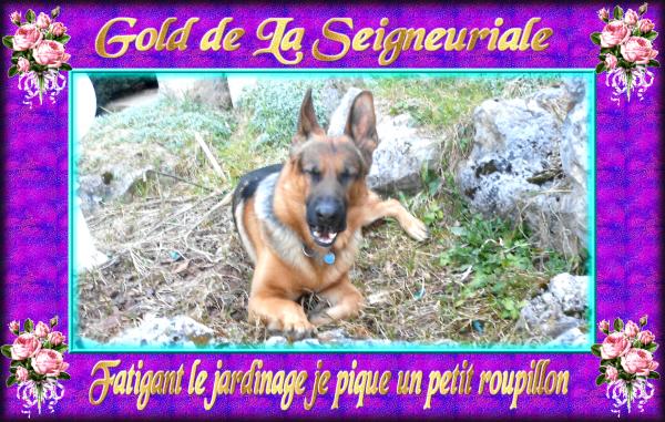 GOLD NOUS SOMMES ENFIN DE RETOUR AVEC QUELQUES PHOTOS DU JARDINAGE DU PRINTEMPS ET DES NOUVELLES