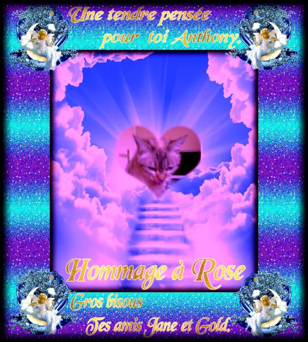 """HOMMAGE A ROSE LA JOLIE MINOUCHE DE NOTRE AMI ANTHONY QUI EST PARTIE AU PONT DE L"""" ARC EN CIEL"""