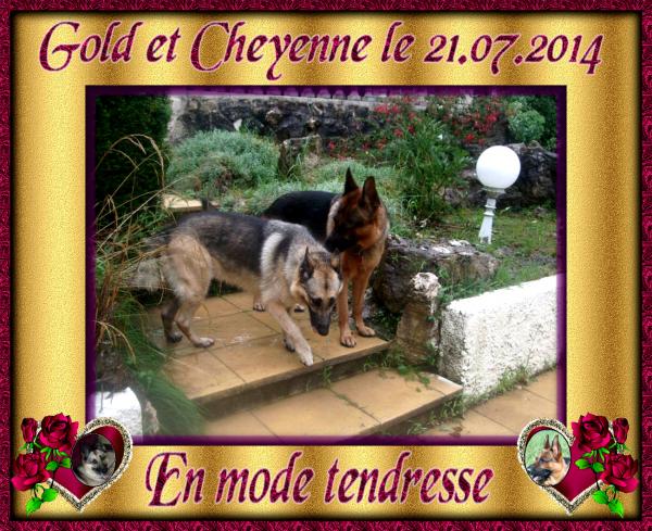 GOLD SUITE PHOTOS DU 21.07.2014 LORS DE LA VISITE DE CHEYENNE