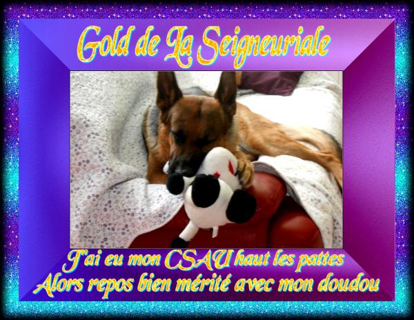 "GOLD TROP FIERE DE MOI MAMOUNE LE 10.05.2014 J ""AI OBTENU MON CSAU"