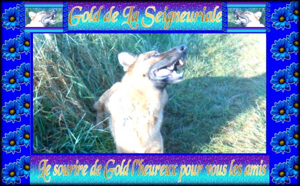 Gold News et photos ballade