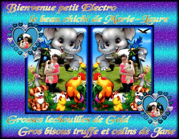 Cadeau de bienvenue pour Electro le beau chichi de notre amie Marie-Laure