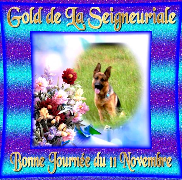 Bonne journée du 11 Novembre et Vidéo de Gold en mode détente après le Pistage cet été.