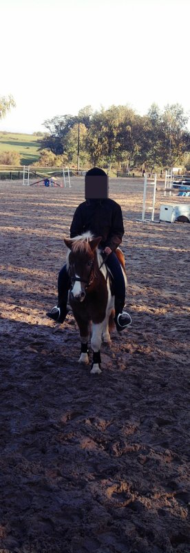 Le cheval est la plus noble conquête que l'homme ait jamais faite.