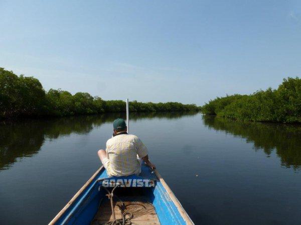 Tour en pirogue Sénégal -  Sine Saloum