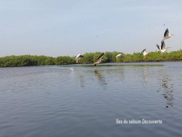 Sénégal-îles du saloum Découverte