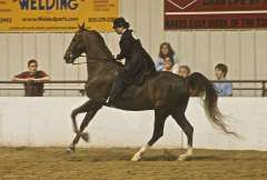 Le american saddlebred: suite.