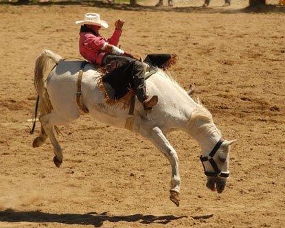 Saddle bronc riding: La monte de chevaux sauvage avec selle.