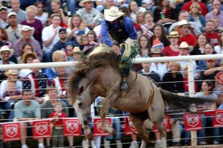 Bareback bronc riding: la monte à cru de cheval sauvage.